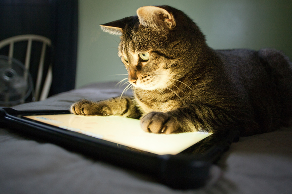 5 Fun Games and Apps for Your Cats