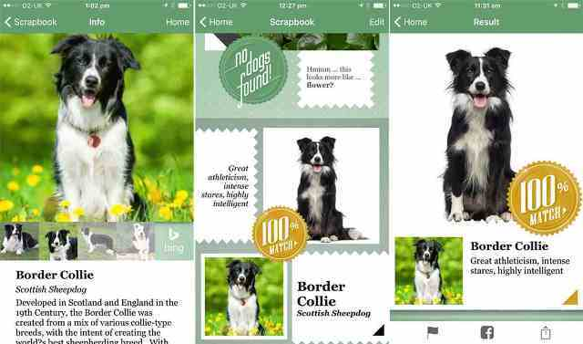 Fetch! of Microsoft Can Guess the Breed of a Dog from a Photo